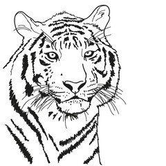 tiger drawn with a black outline, coloring