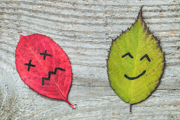 Two colorful autumn leaves with face emotions - sad and happy. Black marker on the red and green leaves. Characters on the old wooden background.