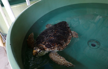 The Wider Image: Saving Turkey's turtles from builders and boats