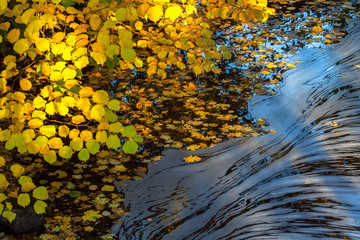 Foam floating on the water at autumn colored branches