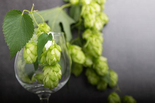 Bio beer hop