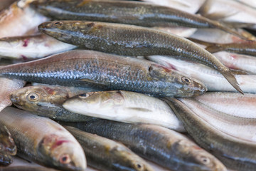 Fresh sardines displayed on the fish market