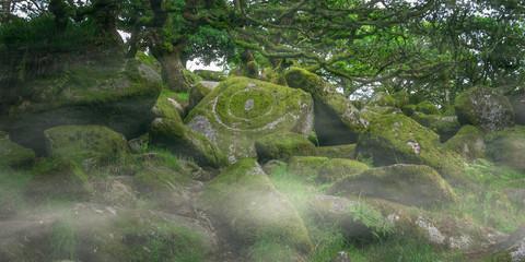 Wistmans Wood Dartmoor Devon England UK