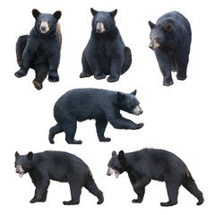 Black bear collection on white background
