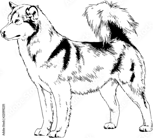 Pedigree Dog Drawn In Ink By Hand Stock Image And Royalty Free