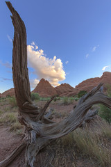 Dry natural wooden harp at Arches National Park