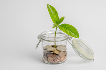 Coins in a glass jar with a green plant growing inside, isolated on white