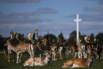 Deer rest in front of the Papal cross during sunny weather at the Phoenix Park in Dublin