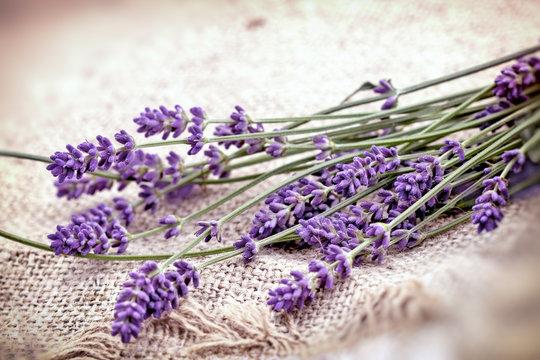 Lavender bouquet closeup, lavender on canvas background