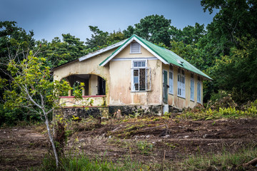 Abandoned old house with an ackee fruit tree in front, in the countryside in Jamaica