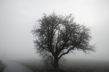 Tree silhouette and road through winter mist