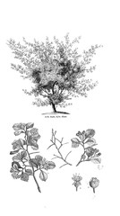 Illustration of tree