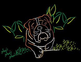 Bulldog in a grass