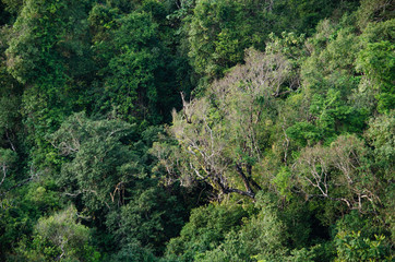 Rain forest is important in Thailand . It is habitat for wildlife