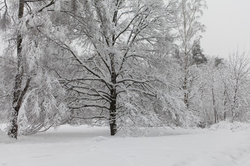 Bad weather concept. Snowfall in the park, winter weather scene, snow covered trees landscape. Fotomurales