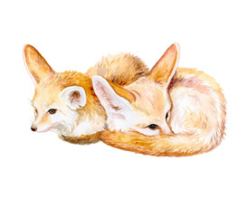 Fennel Fox. African fox. Sleeping fox isolated on white background. Watercolor. Illustration. Template. Hand drawn. Clip art.