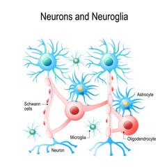 Neurons and neuroglial cells.