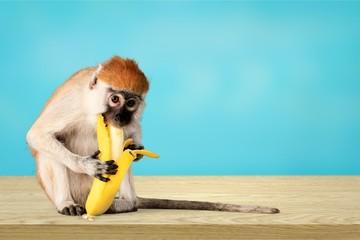 Monkey.