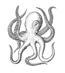 octopus, decorative monochrome vintage ink hand drawing