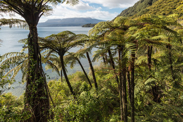 Foto auf Acrylglas Neuseeland tropical rainforest with black tree ferns at lake Tarawera, New Zealand