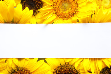 Beautiful bright sunflowers and card as color background