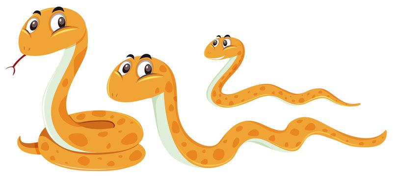 A set of snake on white background
