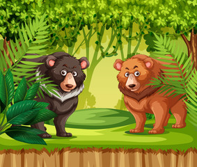 Bears in the jungle