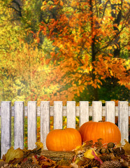 Autumn festive background with pumpkins on straw and leaves outdoor for Thanksgiving in forest