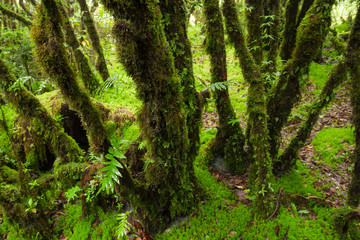 Green jungle or Tree rain forest of ang ka trail in doi inthanon national park, Chiang Mai, Thailand