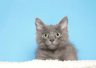 Portrait of an adorable grey kitten laying on sheepskin blanket looking directly at viewer with wide eyes, blue background with copy space.