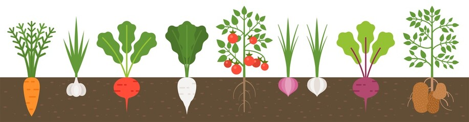 vegetable with root in soil texture, flat design
