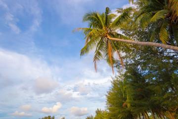 top of coconut tree
