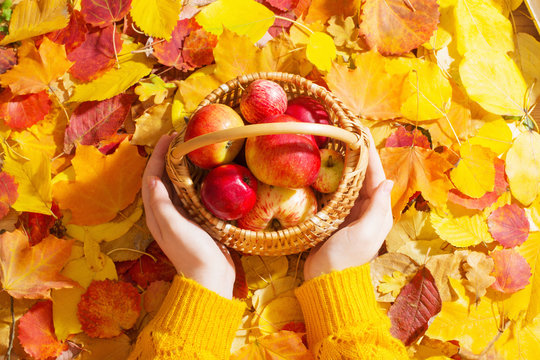apple in hand on background of autumn leaves