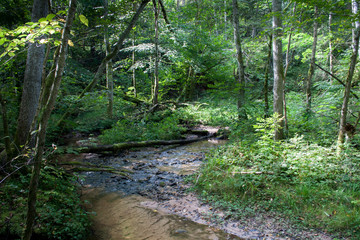 small stream current in wild green forest in Gauja National Park