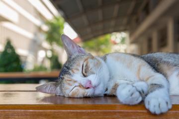 sleepy kitten cat lying on the table with green bokeh