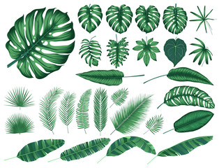 Wall Mural - Detailed tropical leaves and plants, vector collection isolated elements