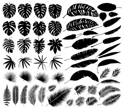 Vector set of silhouettes of tropical leaves, botanical isolated elements