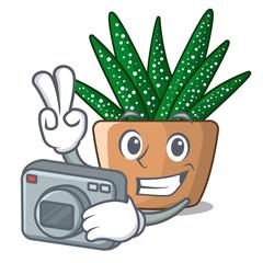 Photographer cartoon zebra cactus blooming in garden