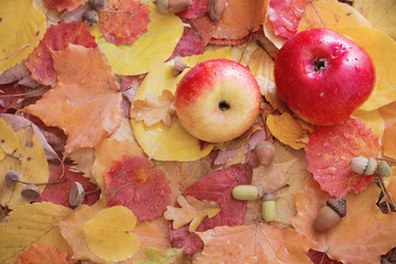 apples and autumn leaves with rain drops