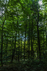 Fotobehang Bossen Wald bei Rostock