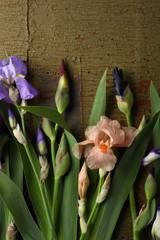 Iris flowers on green wood