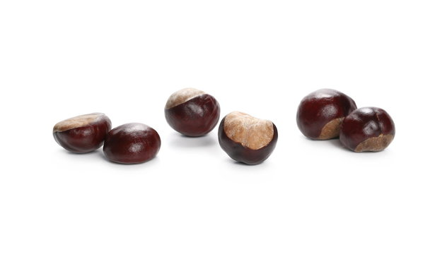 Wild chestnuts isolated on white background