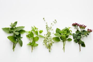Assortment of fresh herbs (catnip, mint, thym, lemon balm and oregano)