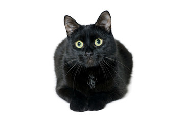 Young black cat lying on a white background
