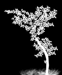 young white isolated tree illustration