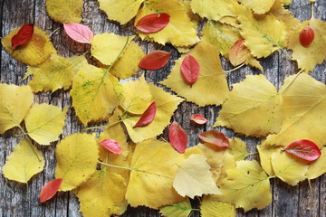 Yellow and red autumn leaves on wooden desk. Fall foliage, welcome autumn, seasonal background concept.
