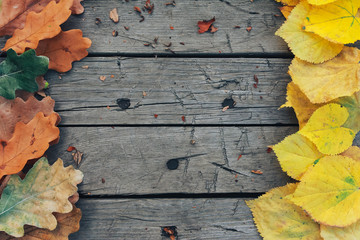 Fall foliage on wooden planks. Autumn background concept. Oak leaves, outdoors, September, October, copy space