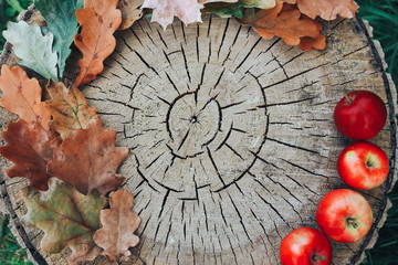 Apples and Fall Foliage on wooden stump. Autumn background, thanksgiving concept. Oak and maple leaves, cut, apple picking, September, October, November