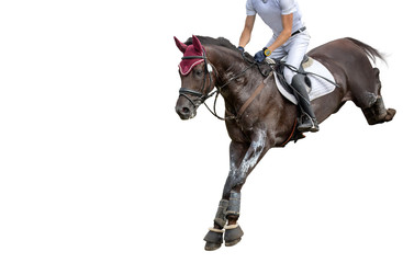 Jumping horse with a rider isolated on white background. Show-jumping.  Wall mural
