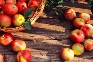 Apple picking, fall harvest concept. Apples on old shabby wooden planks. Horticulture, orchard, gardening, august, autumn, fall, basket, board